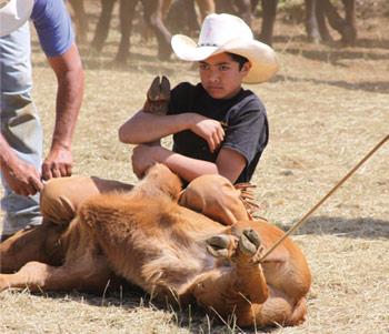young Maui cowboy