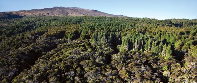 hawaiian forest canopy