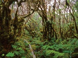 kamakou preserve, molokai hiking