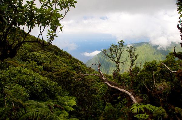 molokai kamakou preserve
