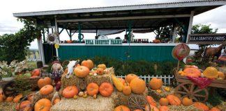 keokea pumpkins