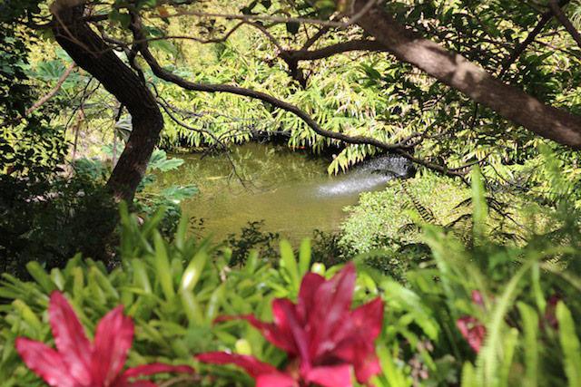Kula Botanical Gardens in Maui