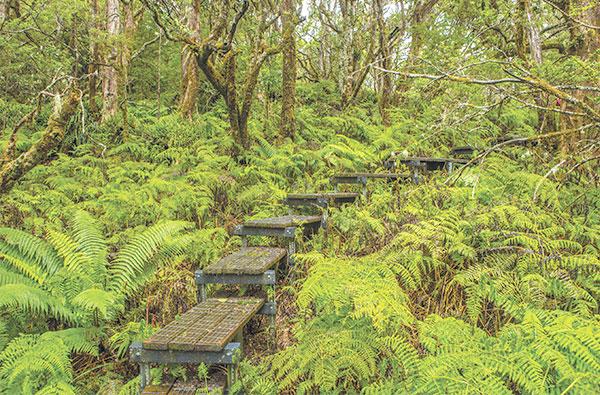 waikamoi preserve