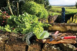 mandala-garden