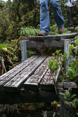 maui-bog-steps