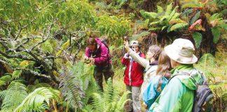 help maui forest birds