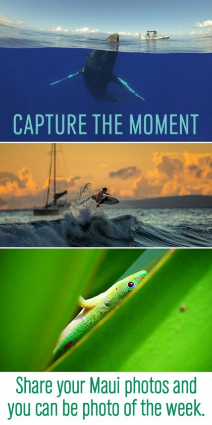 Maui photo contest