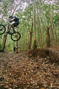 Maui trails
