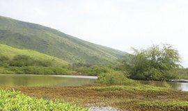 maui wetlands