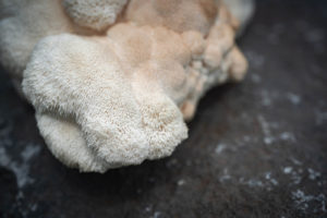 White lion's mane