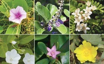 native Hawaiian flowers