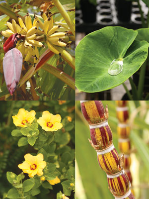 Maui botanical gardens