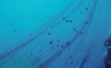 ocean nets