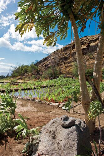 Olowalu Maui