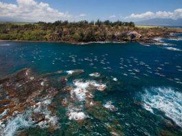 Olukai race Maui