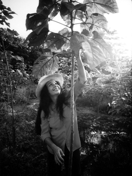 pua-with-wauke-sapling