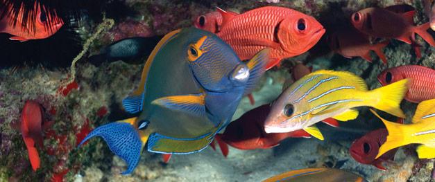 reef-fish-count-snorkel-volunteer