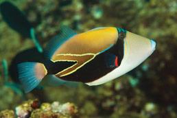 Maui snorkel spots