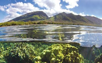 Olowalu Maui snorkel spots