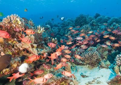 Ulua Beach Maui snorkel spots