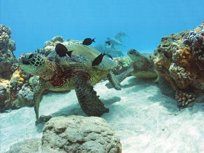 snorkeling-sea-creature-barbershops