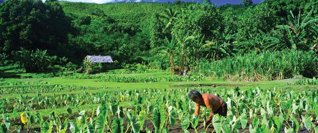 taro-farming-volunteer-hana