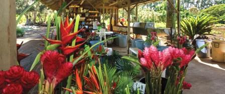 maui flower farm