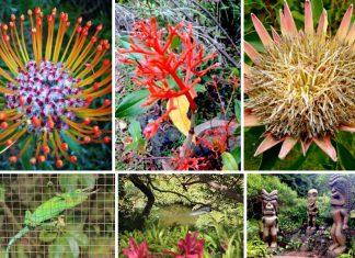 tropical flower garden maui