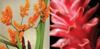 maui tropical flowers