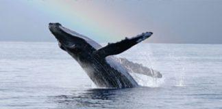 whale breach rainbow
