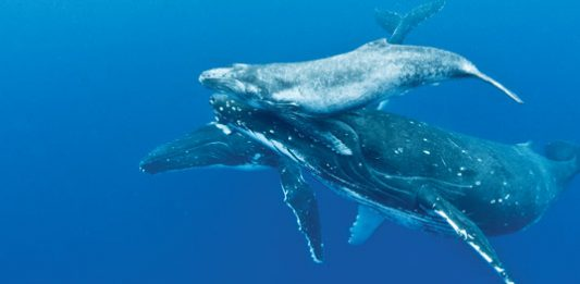whales photography
