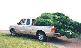 xmas tree truck